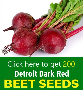 Free Dahlia Seeds