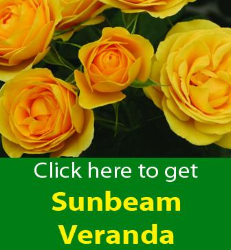 Free Sunbeam Veranda
